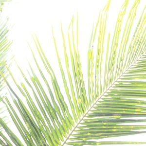 5 Palm Sunday Sermons