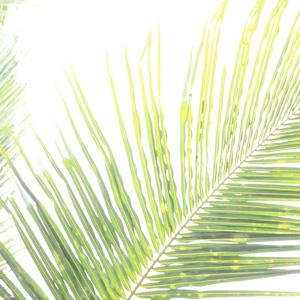 5 Palm Sunday Sermons