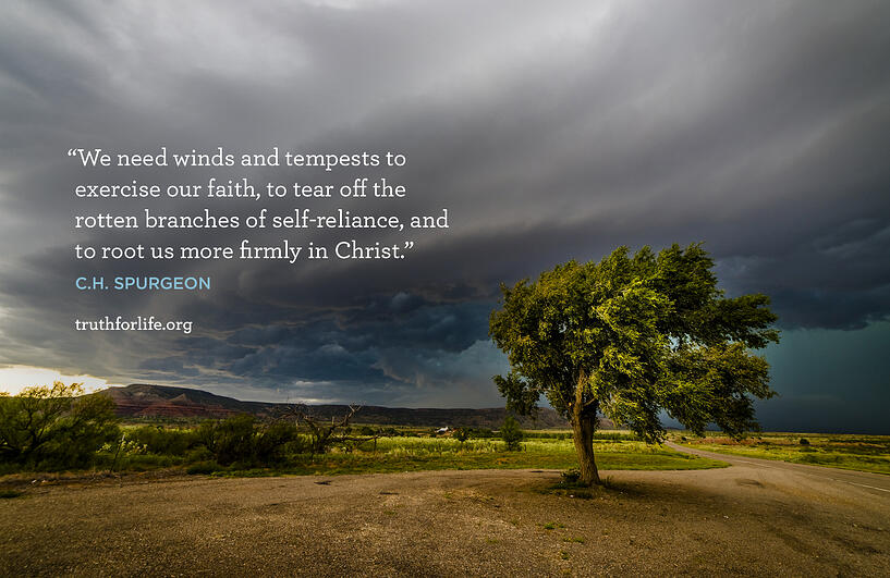We need winds and tempests to exercise our faith, to tear off the rotten branches of self-reliance, and to root us more firmly in Christ. - C.H. Spurgeon
