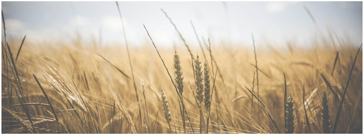 thumbnail image for Being Thankful by Alistair Begg