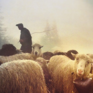 thumbnail image for Hymn: I Have a Shepherd