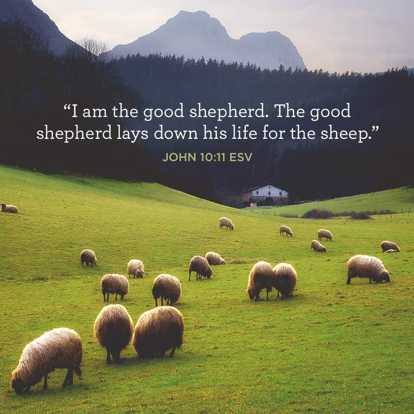thumbnail image for I Am the Good Shepherd