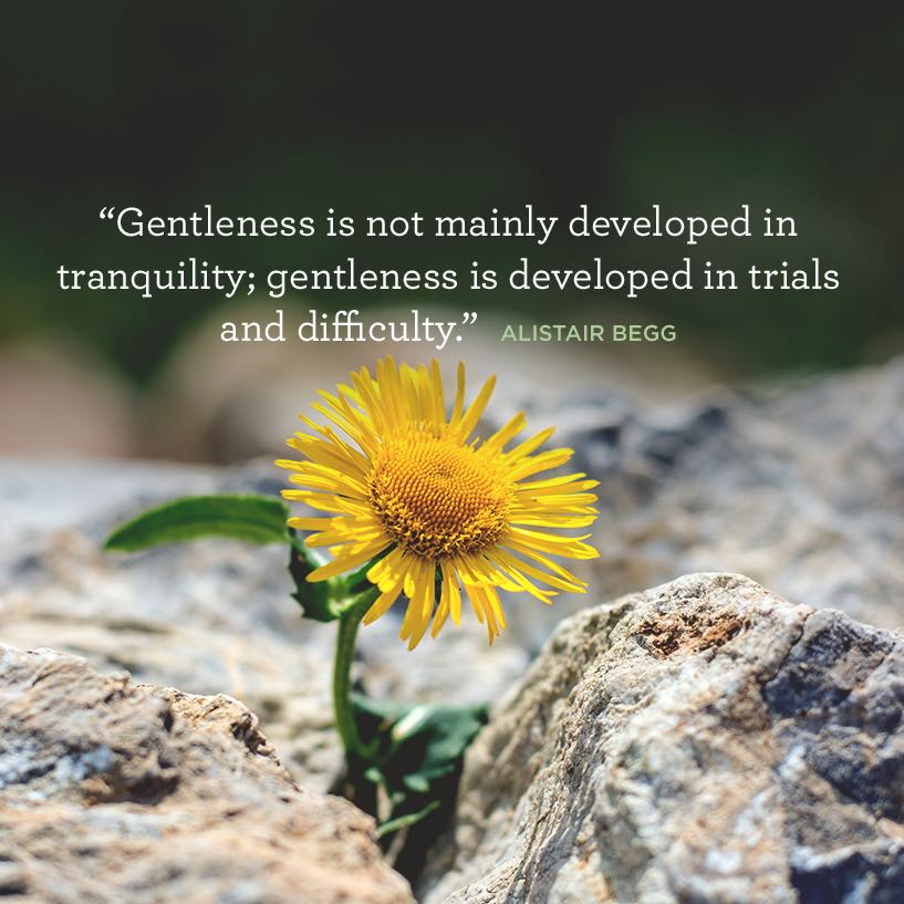 thumbnail image for Gentleness Through Trials and Difficulty