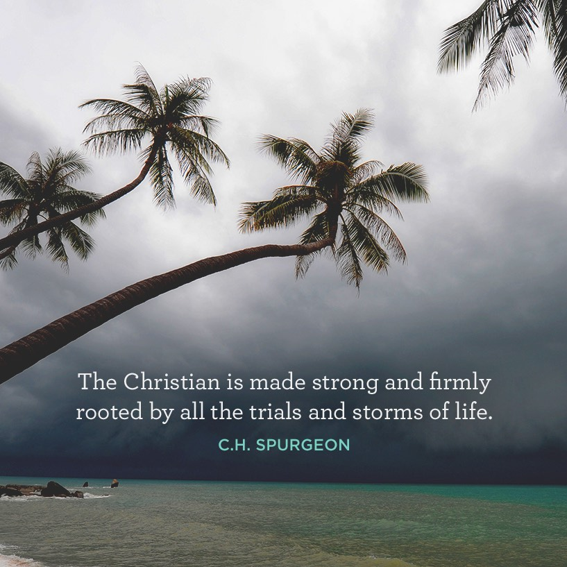 thumbnail image for Firmly Rooted by Trials