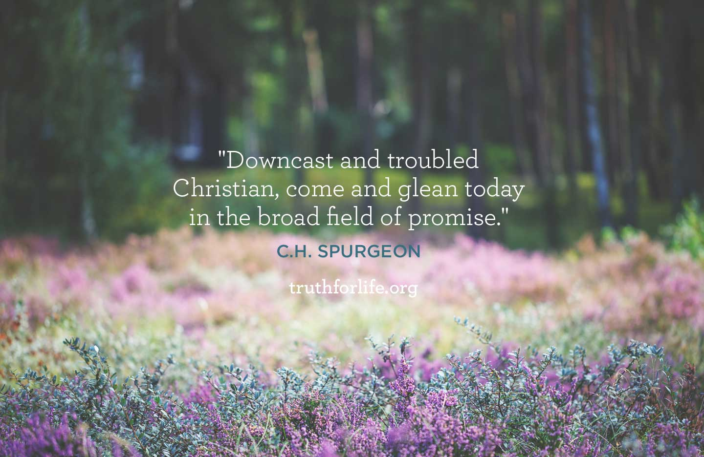 thumbnail image for Field Of Promise: Wallpaper