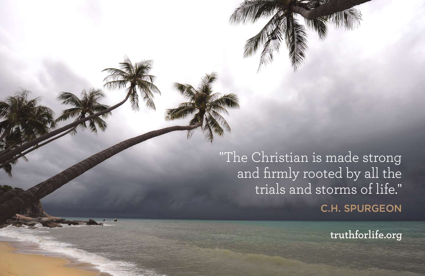 thumbnail image for Firmly Rooted: Wallpaper