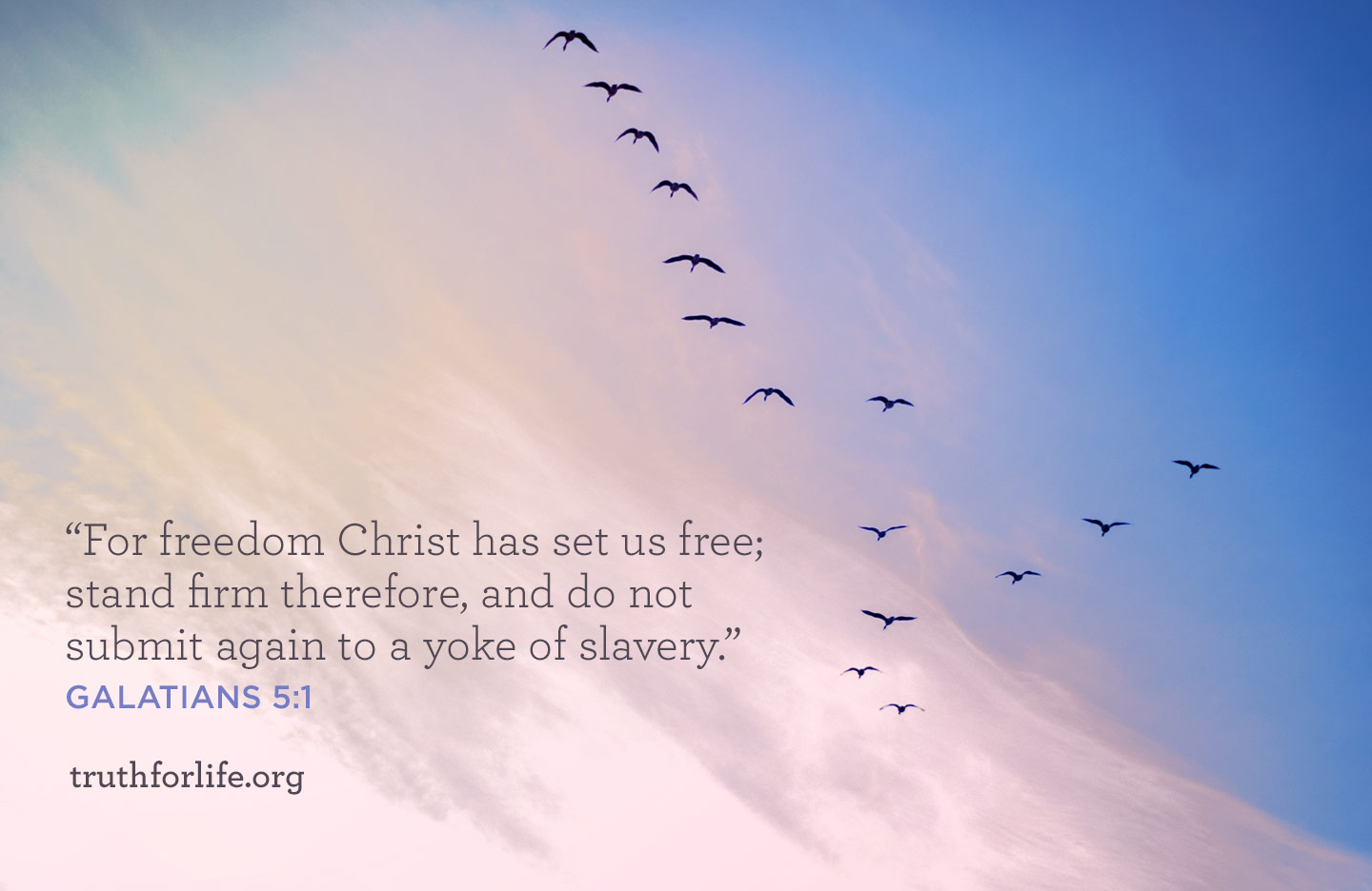 thumbnail image for For Freedom : Wallpaper