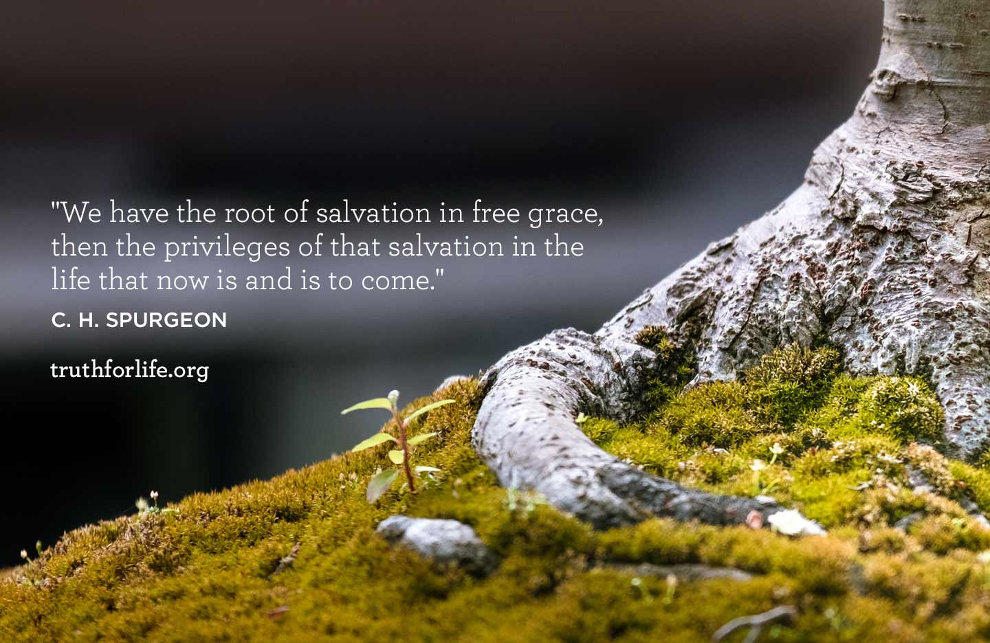 thumbnail image for Root of Salvation:Wallpaper