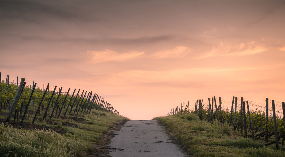 thumbnail image for Sermons from Mark by Alistair Begg